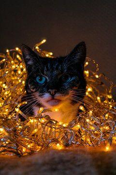 Katze fällt ins Licht. von Bram van Egmond