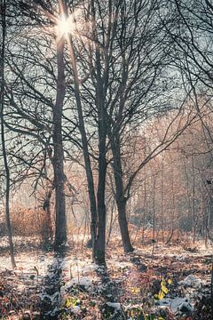 Kaltes Licht von Severin Frank