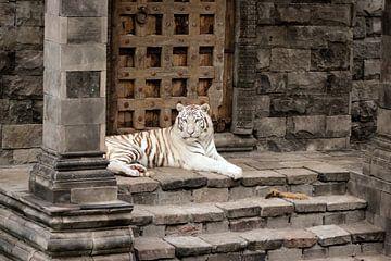 Witte tijger von Kim de Groot