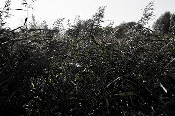 Duistere natuur achtergrond van bladeren en gras met een duistere mysterieuze ambiance. van N. Rotteveel