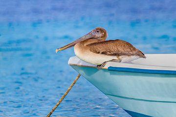 Bruine pelikaan zit op voorkant van bootje op zee van Ben Schonewille