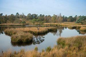 View over Dutch bog reserve De Duivelskuil, nature reserve Maasduinen, Netherlands