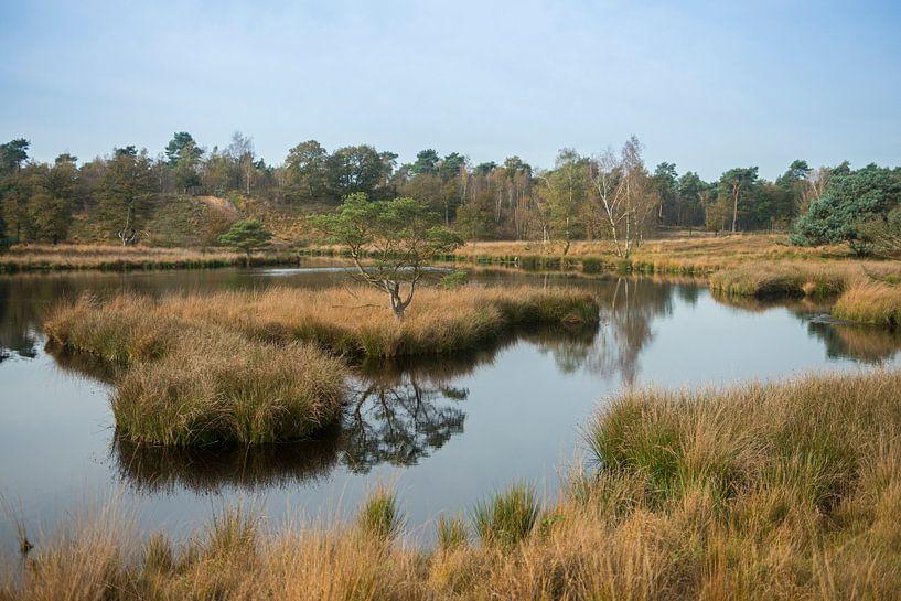 View over Dutch bog reserve De Duivelskuil, nature reserve Maasduinen, Netherlands van wunderbare Erde