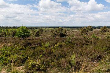 Sallandse heuvelrug panorama van Jaap Mulder