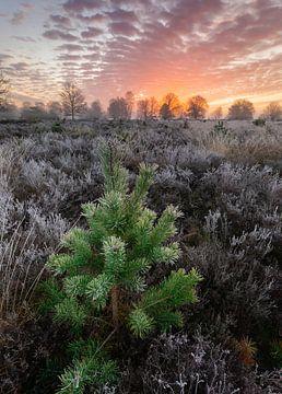 Ijzig kerstboompje van Arjen Noord