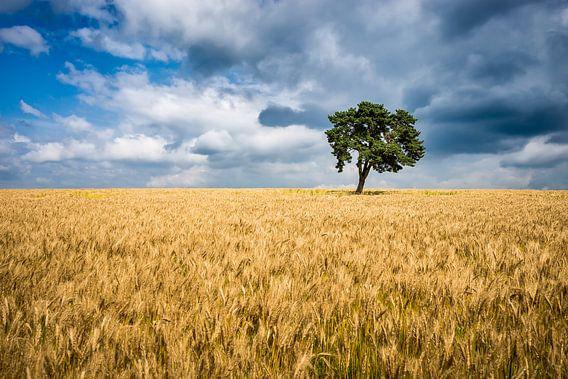Eenzame boom in een graanveld Frankrijk van Etienne Hessels