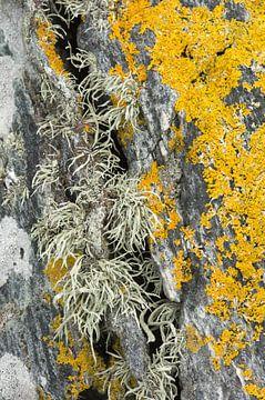 Patronen van Korstmossen op een rots van Ron Poot