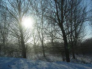 Winterlandschap in mooi zonlicht