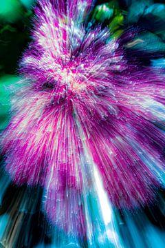 lila Blume von Jan Peter Jansen