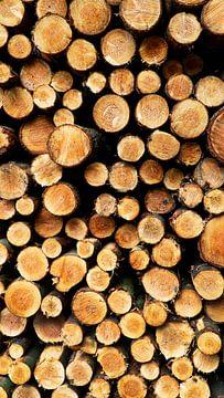 Gestapelte Baumstämme von Koen Leerink