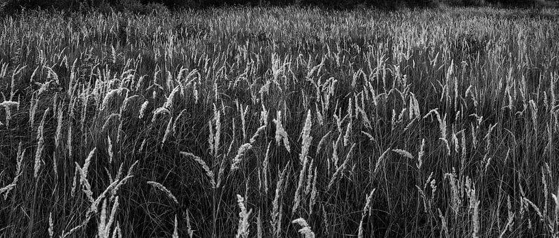 Gras halmen van Bastiaan Schuit