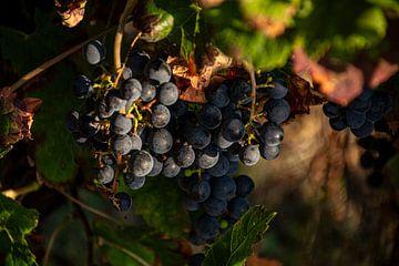 Trauben im Weinberg von Stan van den Beld