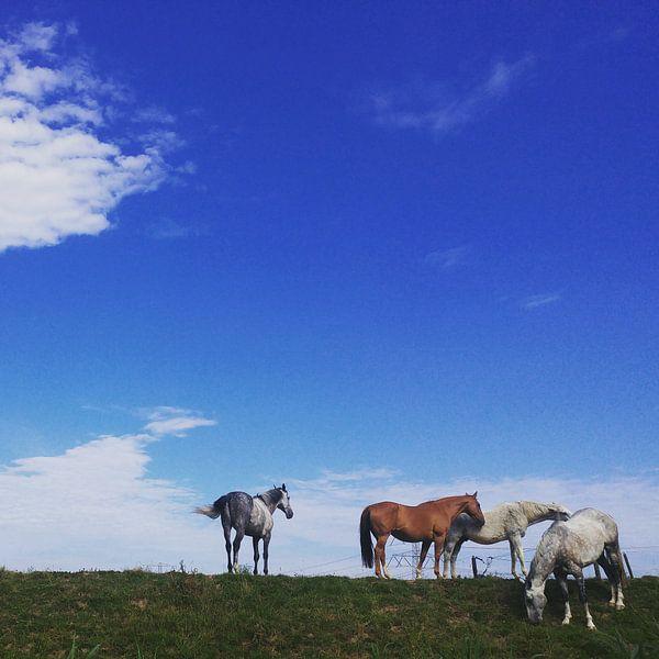 Paardjes in de wei van Michael van Eijk