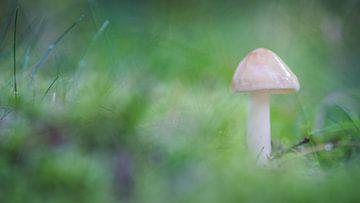 Pilz in grün sur Martzen Fotografie