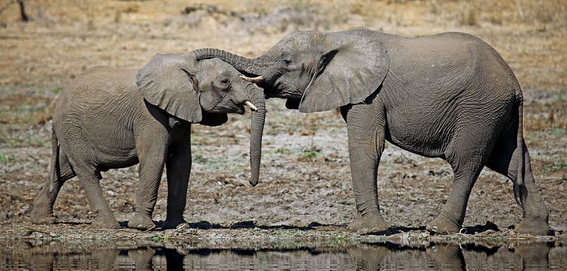 Be together - Africa wildlife van W. Woyke