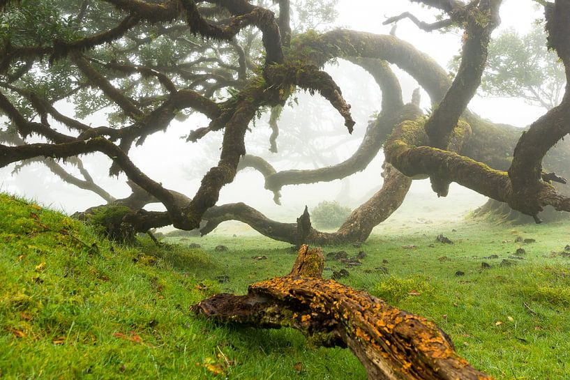 Bomen in Madeira van Michel van Kooten
