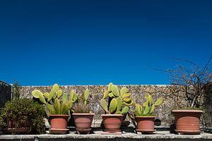 Cactus sur