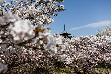Kyoto, Japan - Tijdens de bloesemperiode