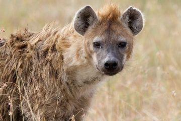 Hyäne von Angelika Stern