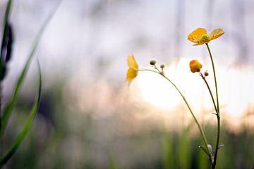 Gele Bloemen van Lonneke Prins