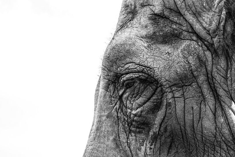 Close-up van olifant van Christiaan Onrust