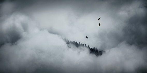 Drie buizerds in de wolken