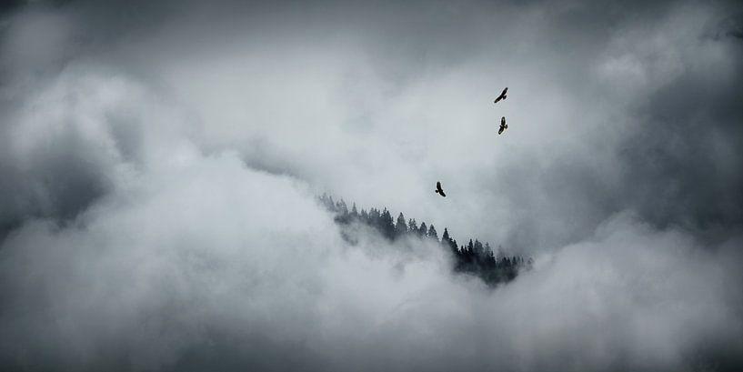 Drie buizerds in de wolken van Nando Harmsen