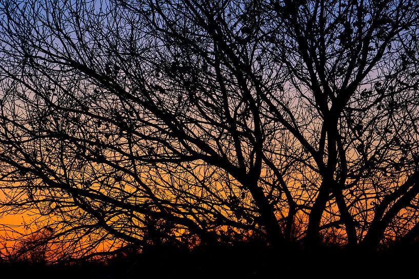 Silhouet van een boom tegen avondlicht van Bastiaan Vogel