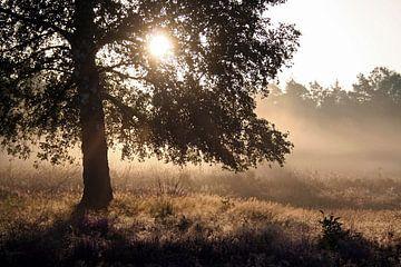 Zonsopkomst op de Veluwe, nevels en een silhouet von J.A. van den Ende