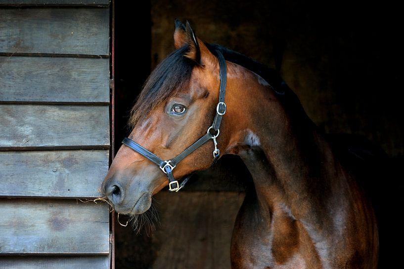 Bruin paard in staldeur  van Studio Nooks
