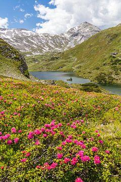 """Paysage de montagne """"Roses des Alpes au lac Giglachsee"""" sur Coen Weesjes"""