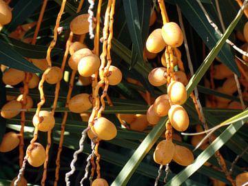 Dadel palm  van Elize Fotografie