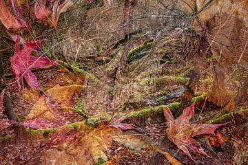 diep in het woud van Eugene Winthagen