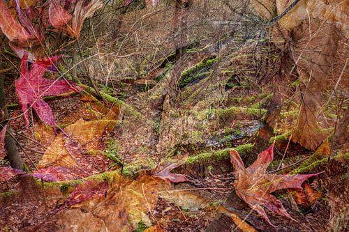 diep in het woud van