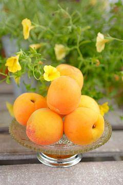 Frische Aprikosen in einer Schale stehen auf einem Tisch im Garten von Edith Albuschat