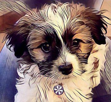 Serie; kleine pup Saartje van