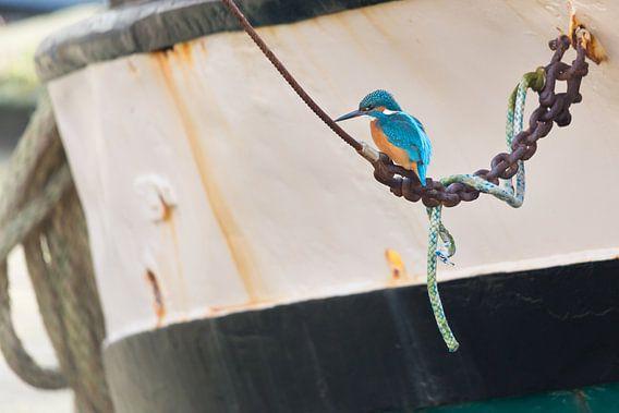 Vogels | IJsvogel bij een boot in de haven van Enkhuizen van Servan Ott