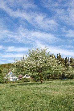 im Bergischen Land bei Solingen von Peter Eckert