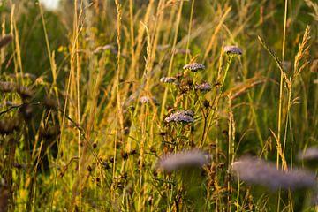 Gras en bloemen in de ochtendzon sur Michel Vedder Photography