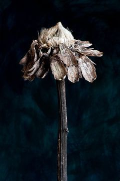 Natur Morte - Sonnenblume von Remke Spijkers