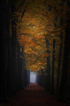 Whispering leaves. loofbos van Saskia Dingemans