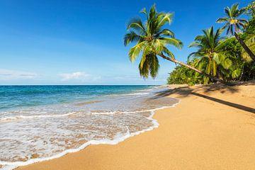 Droomstrand in de Caraïben van Markus Lange