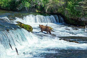 Beren, Bears. Brooks Falls van Yvonne Balvers