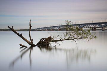 Verdronken boomstronk met als achtergrond de Moerdijk spoorbruggen van Jan van der Vlies