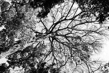 Blick durch den Baum in Schwarz-Weiß von Bianca ter Riet