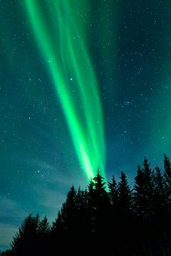 Nordlichter über den Lofoten Inseln in Norwegen von