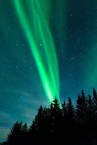 Noorderlicht in de nachtelijke hemel boven de Lofoten, Noorwegen