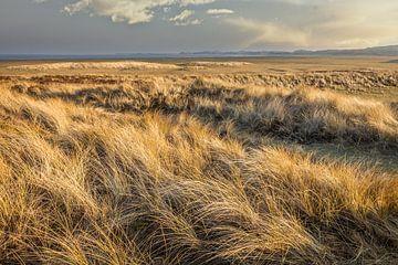Winter in de duinen op Sylt van Christian Müringer