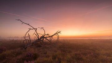 Zonsopkomst Kalmthoutse Heide 3 van Bart van Dongen