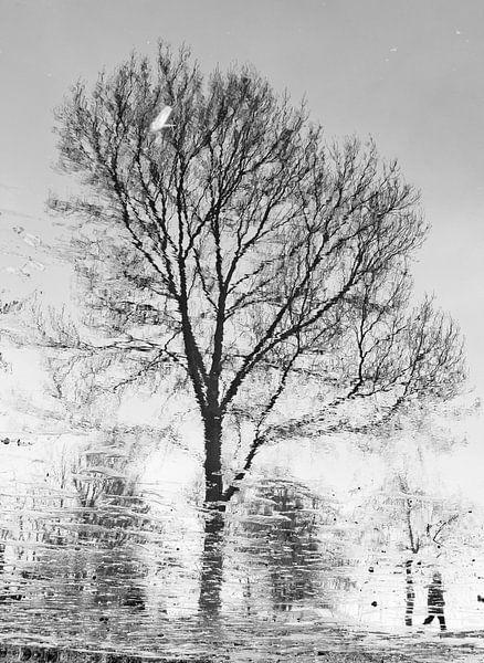 Winter wandeling van Richard van den Hoek